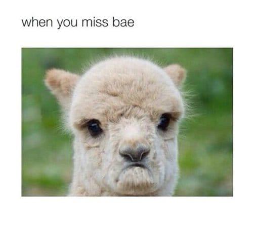 Miss Bae
