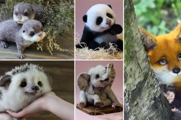 Most Adorable Toy Animals
