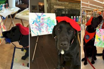 Paintings Talented Canine Dogvinci