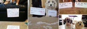 Pairs Animals Partner In Crime