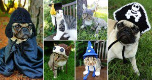 Pets Crocheted Hats Meredith Langley