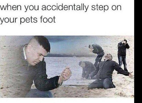 Pets Foot