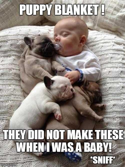 Pupp Blanket