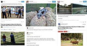 Reasons Australian Wildlife Ridiculous