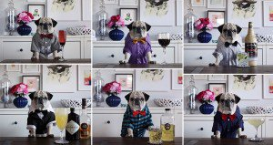 Rocco Cute Pug Bartender