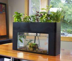 Self-Sustaining Aquarium & Garden