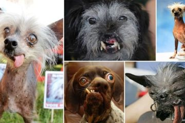 Ugliest Dogs Ever Seen
