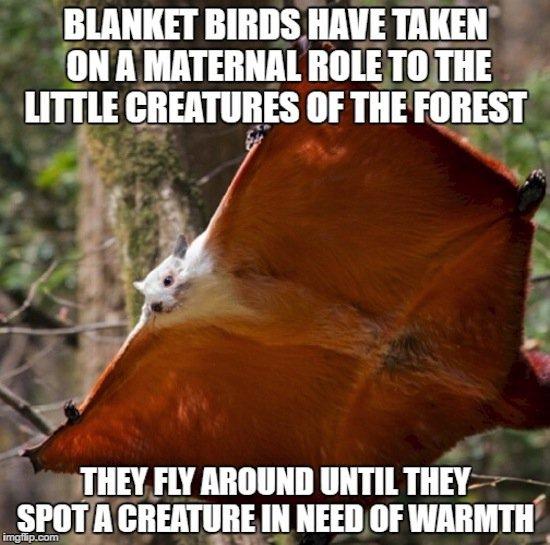 animals-blanket