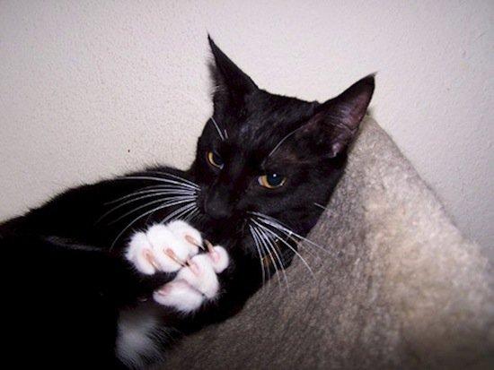 animals-cat-bath