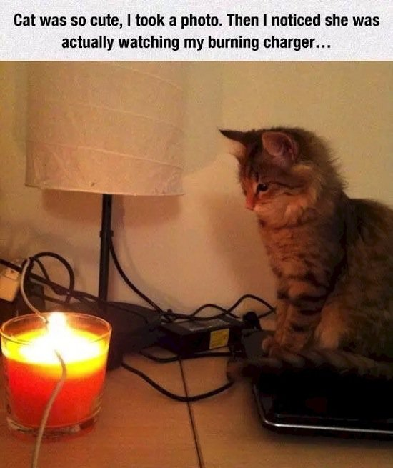animals-cat