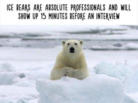 animals-interview