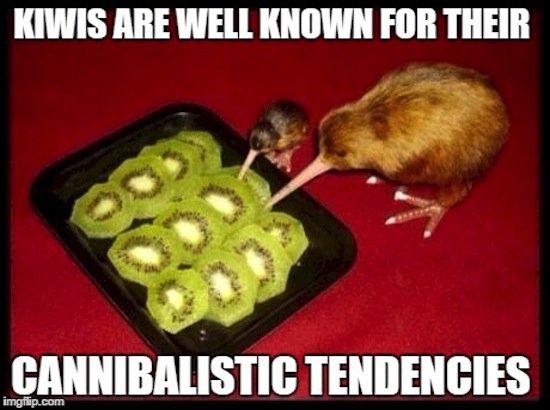 animals-kiwi