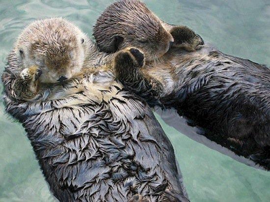 animals-otter