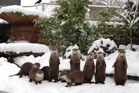 animals-otters