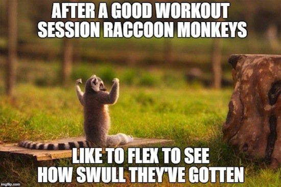 animals-raccoon