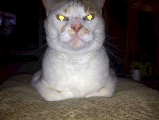 animals-scary-eyes