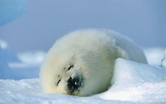 animals-seal