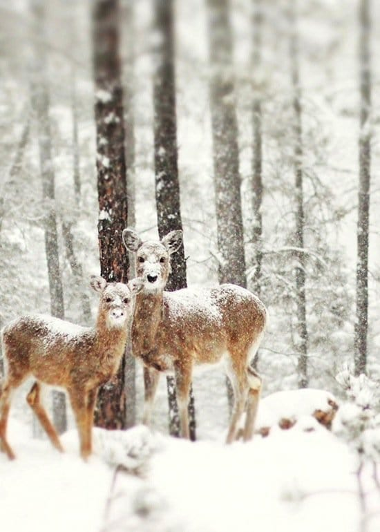 animals-snow
