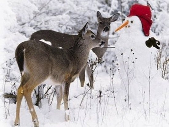 animals-snowmen