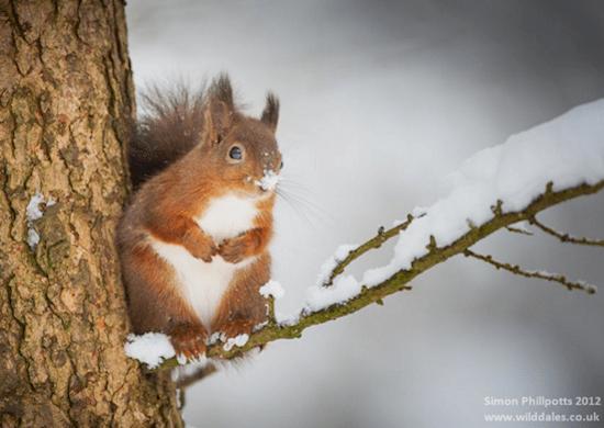 animals-squirrel