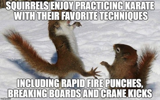 animals-squirrels