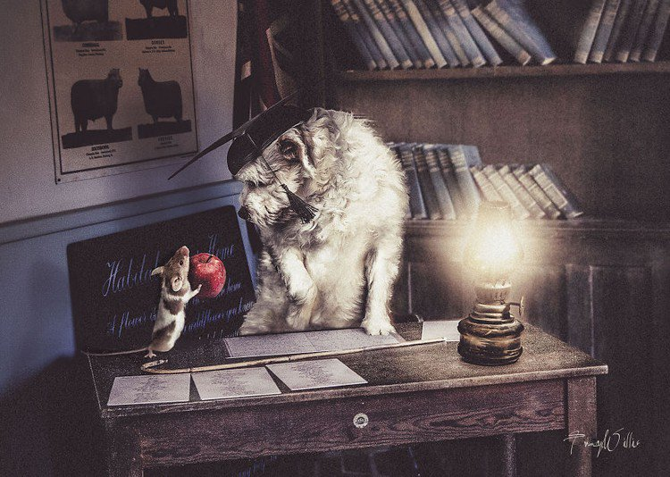 apple teacher animals