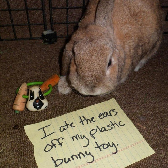 20 Bunny Shaming Photos Of Some Very Guilty Rabbits