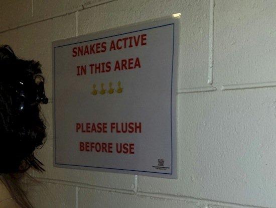 aussie-snakes