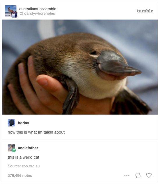 australian-wildlife-platypus