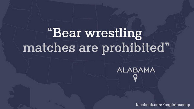 bear wrestling law