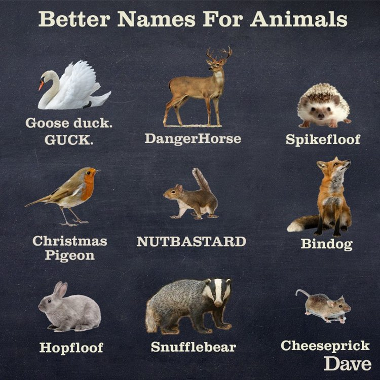 Funny Names For Animals Meme : Funny images giving better names to foods animals