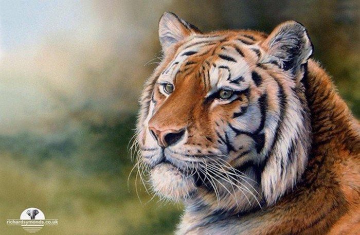 big cat color drawing