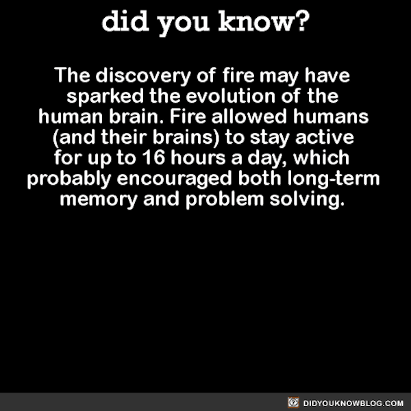 the discovery of fire may have sparked the evolution of the human brain