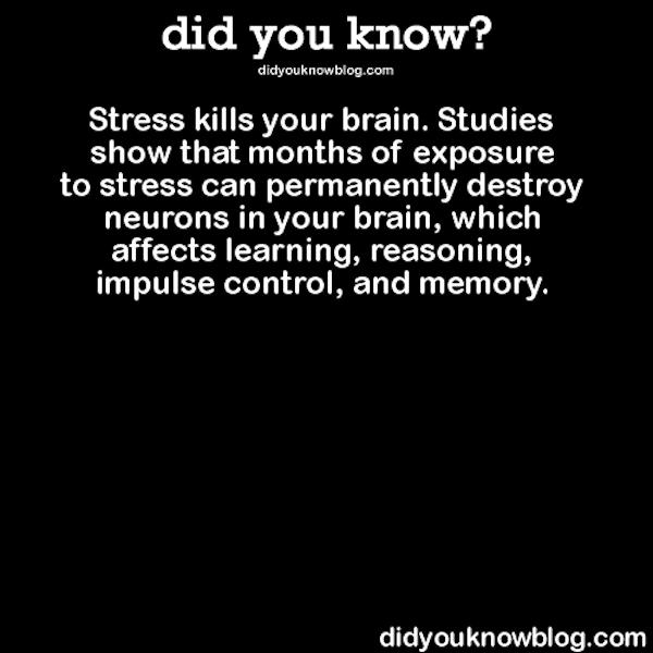 stress kills your brain
