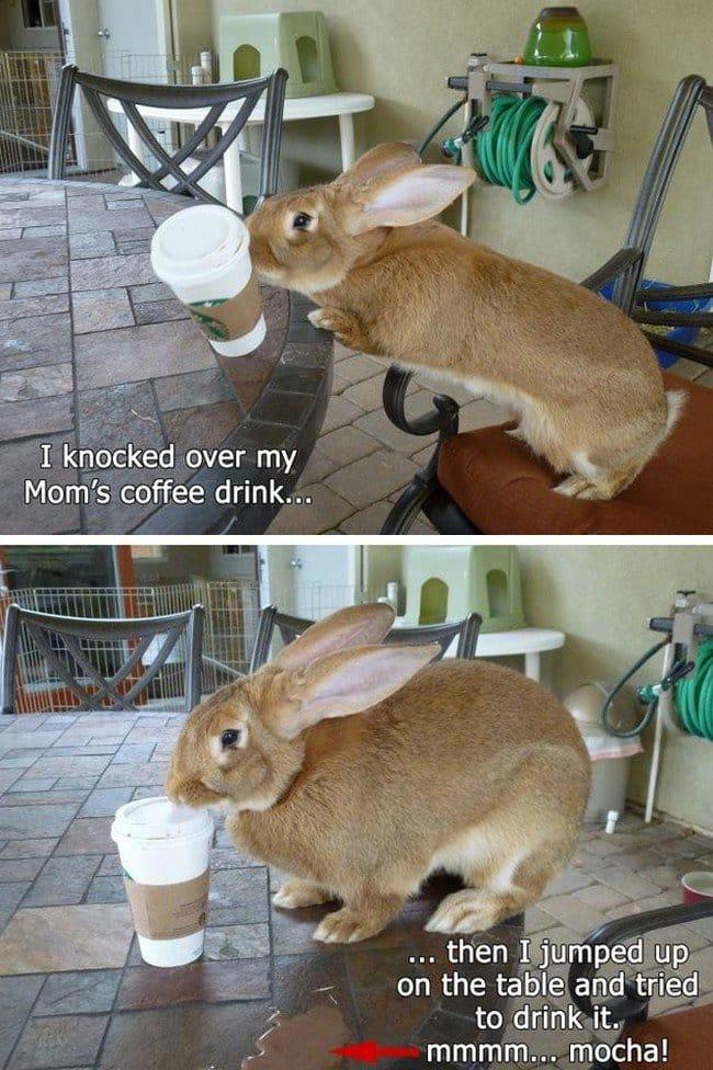 bunny coffee