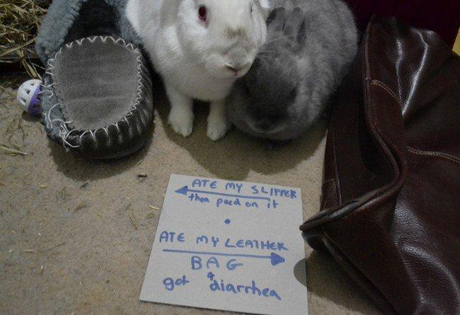 bunny eat