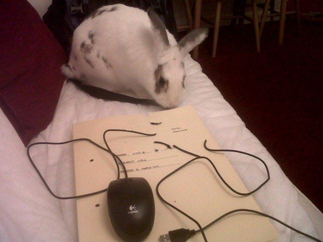 bunny mouse destroy