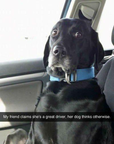 car dog