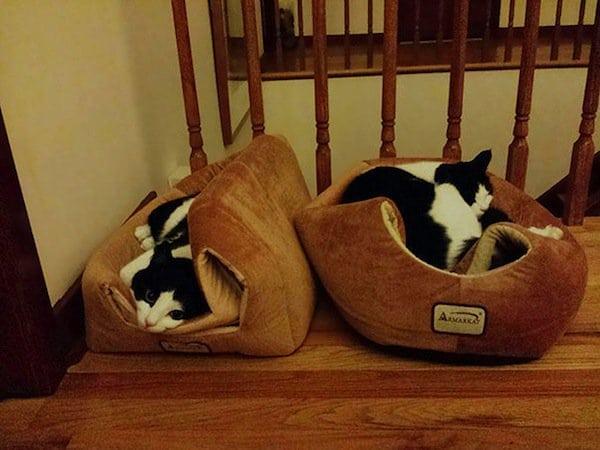 cat-beanbag