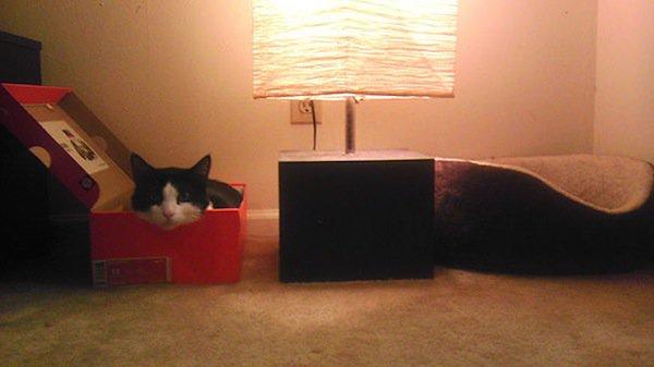 cat-boxes