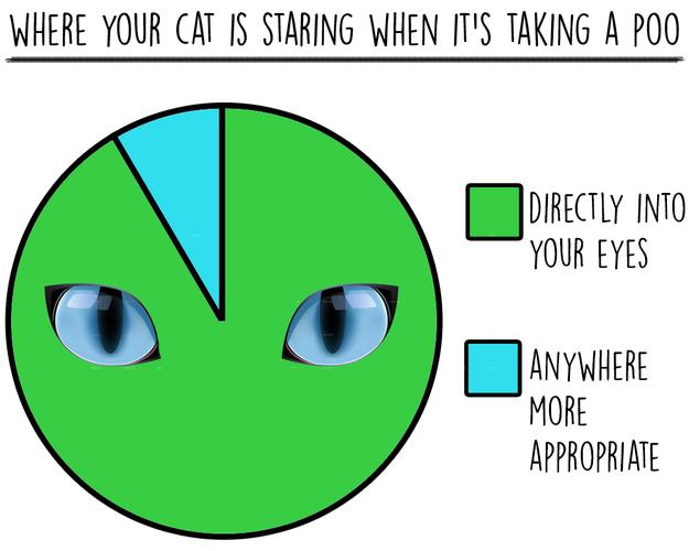 cat-charts-staring