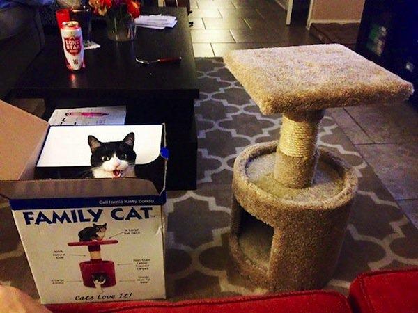 cat-first