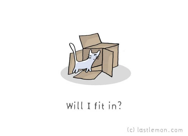 cat fit box
