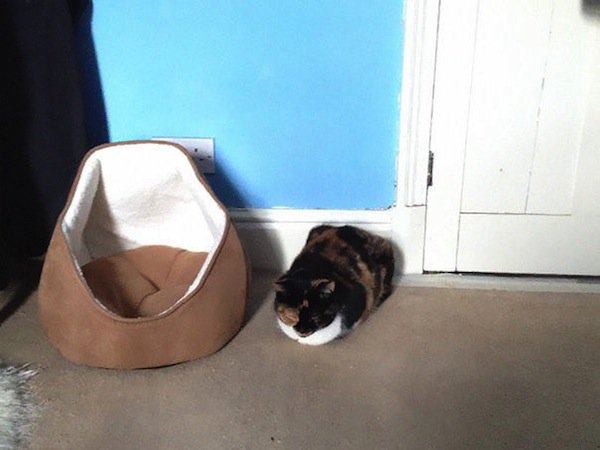 cat-gift