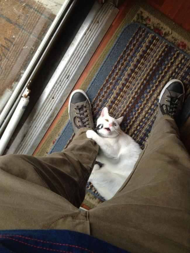 cat leg