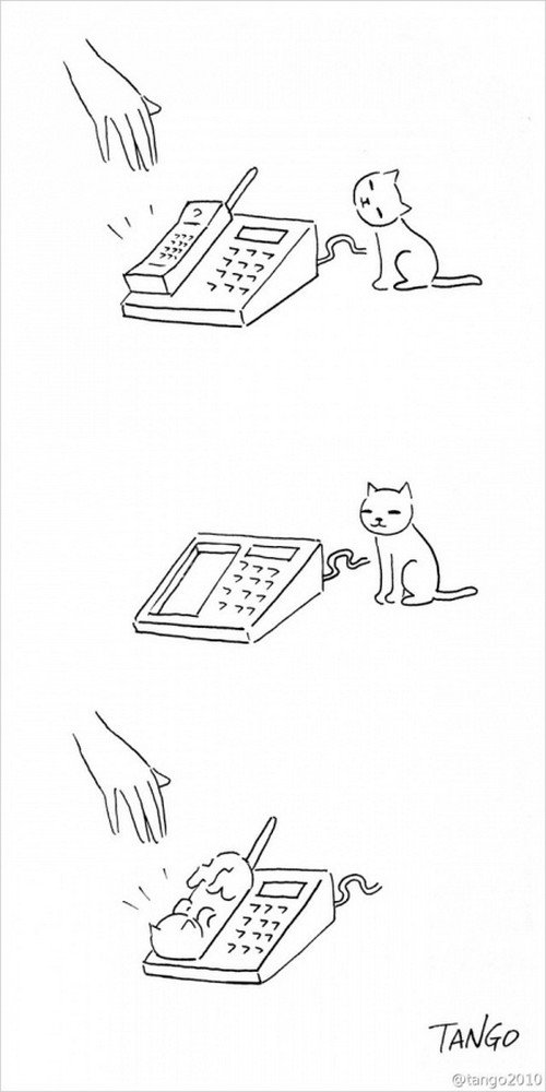 cat phone