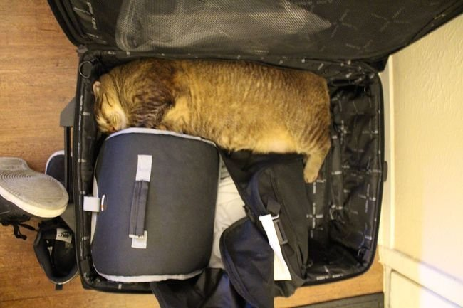 cat sleeping case