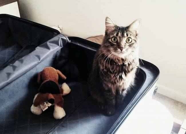 cat toy case