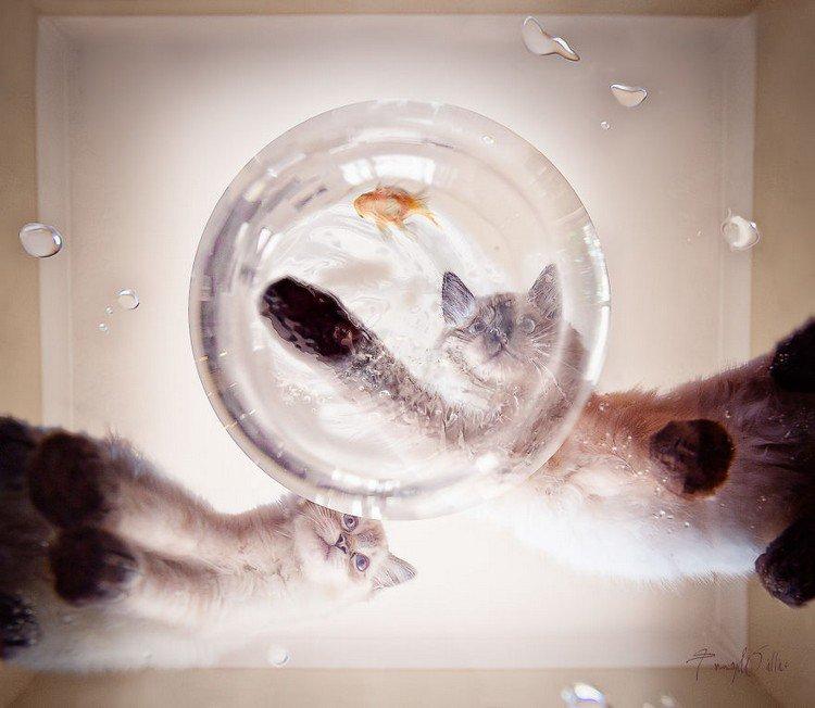 cats fish