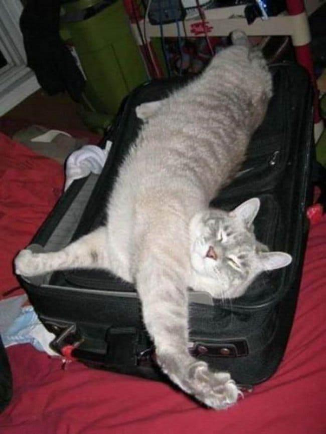 comfy cat case